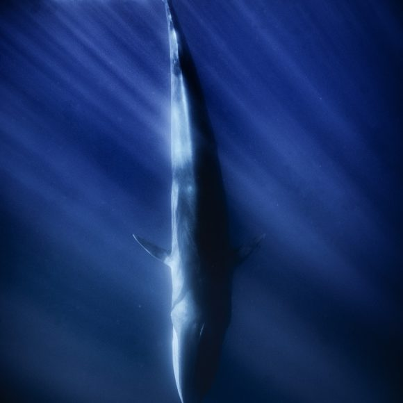 23 – Balene
