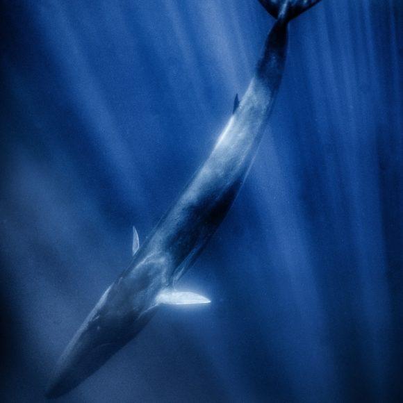 24 – Balene